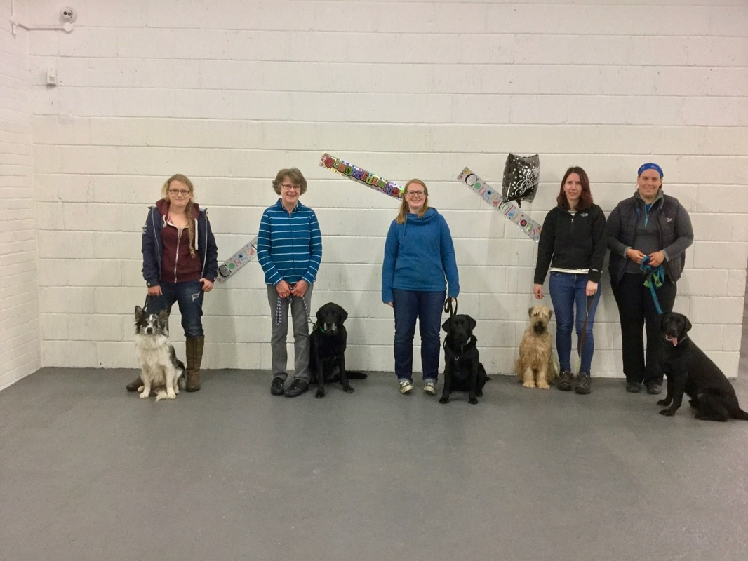 Adult dog training class